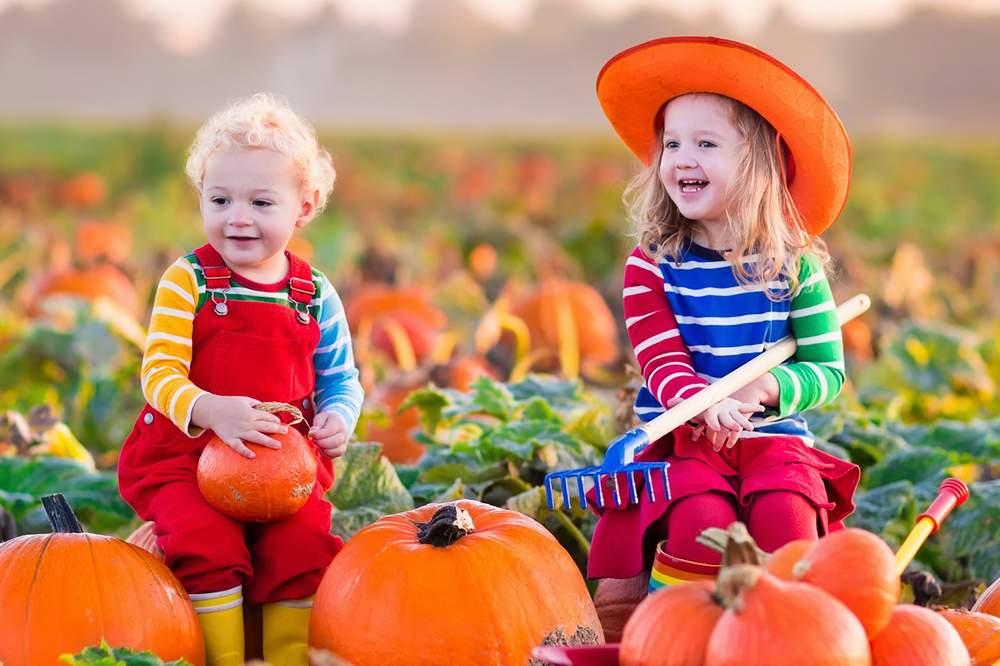 Pumpkin Patch Austin